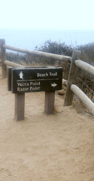 torrey_pines_reserve_trails_san_diego7