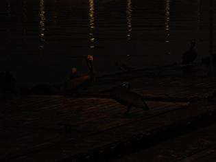 early morning fishing bait image