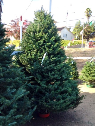 christmas-tree-noble-fir-holiday-traditions