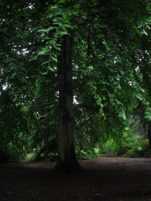 edinburgh-scotland-royal-botanic-garden