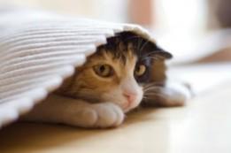 image_207_300_cat-hiding