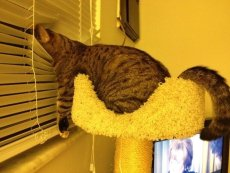 Pet cats' a variety of strange hiding places (10)